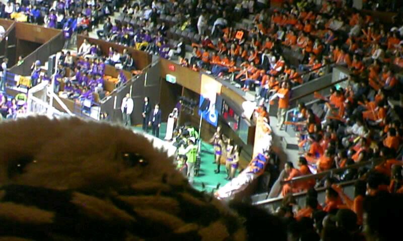 ギャフン!〜bjリーグ2007ー2008 ワイルドカードゲーム東地区 東京vs新潟