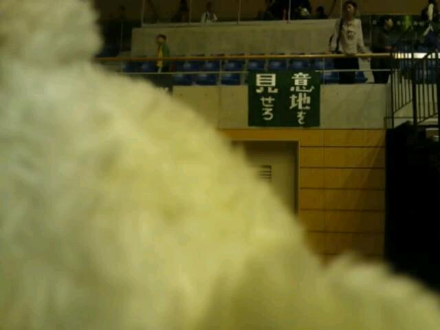 11月20日(日)の結果 (vs富山・ホームさいたま)